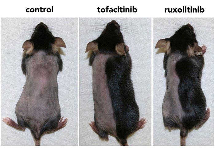 راهکار جدید خود را روی موشها امتحان کرده