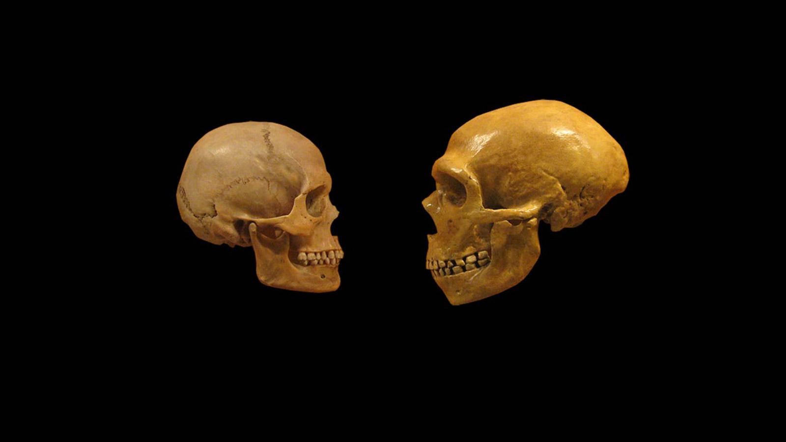فک و دندان انسان های اولیه