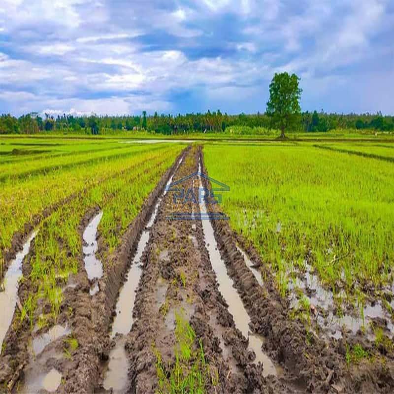 خرید زمین با بافت زراعی